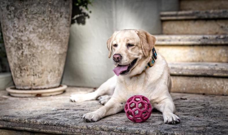 Jak dbać o psa seniora? W jaki sposób opiekować się starszym psem?