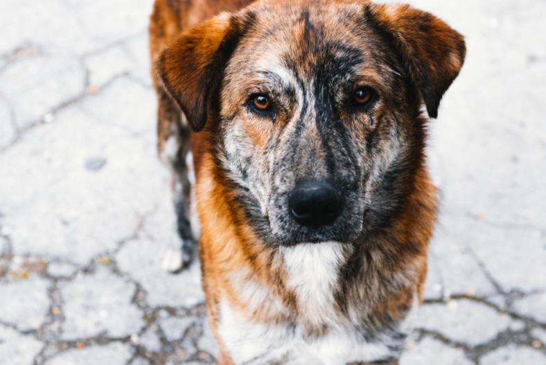 Choroby oczu u zwierząt domowych - najczęstsze przypadki