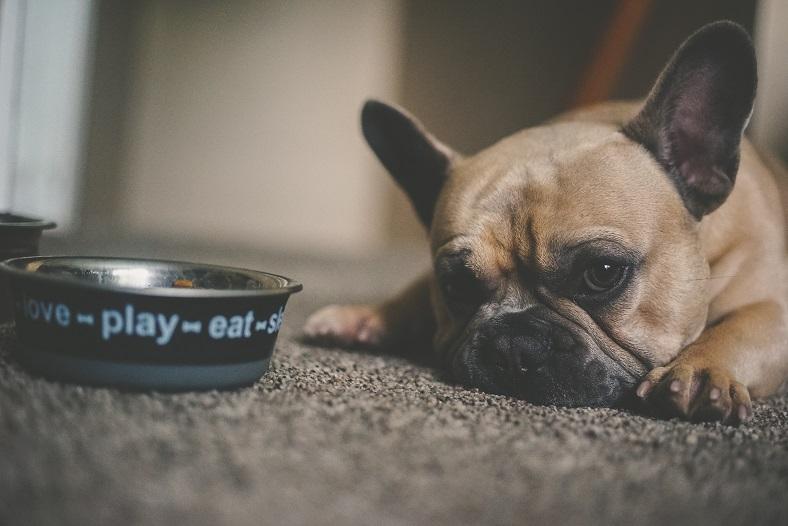 Czego nie wolno podawać do jedzenia psom? Co jest groźne dla ich zdrowia?