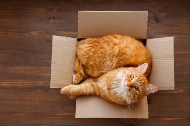 Co zrobić, jeśli mój kot załatwia się poza kuwetą?