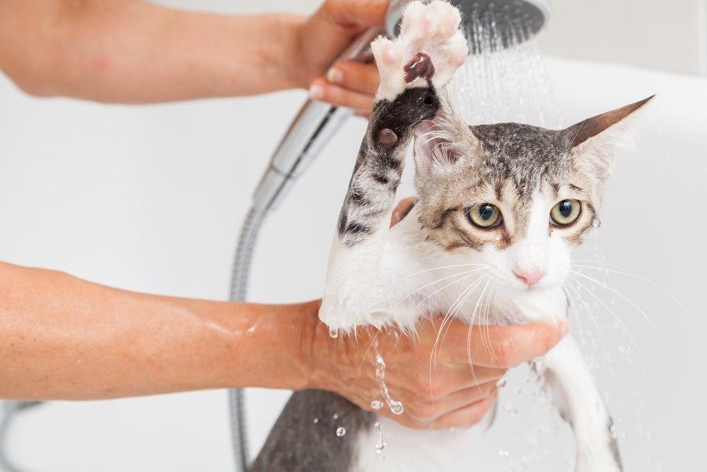 Czym powinno kąpać się kota?