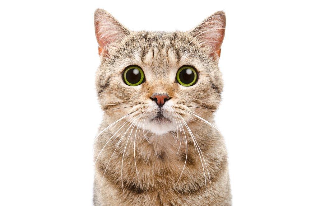 Kastracja a sterylizacja kotki. Czym to się różni?